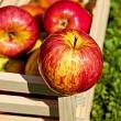 Take the Edgar Cayce Apple Detox Diet With Dr. Zarema Jagizarov
