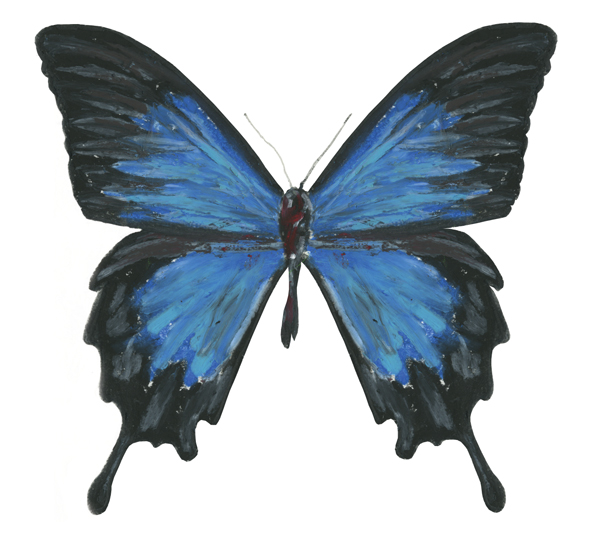 butterfly blue transformation